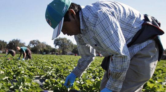 Government of Canada takes early action to improve the Temporary Foreign Worker Program