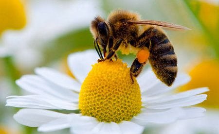 Progress made re. Resolution 2015.03 - Banning the Use of Neonicotinoid Pesticides